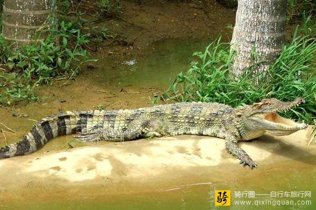 南山动物园位于贵港市港南区南山风景区内